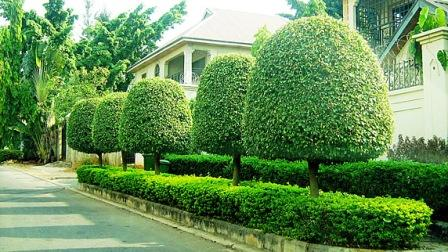 Greenfingers Landscaping Services